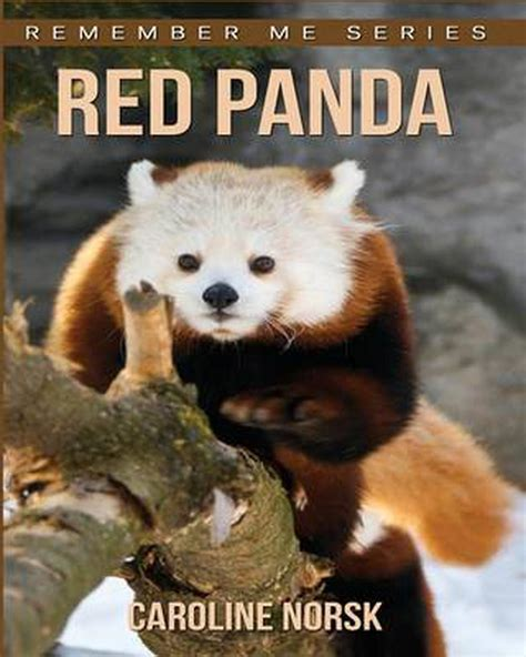 Red Panda Facts for Kids Fun Activities for Kids