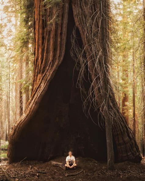Redwood Trees to Pacific Seas MTFCA 2018 National