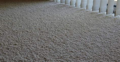 Refresh an Old Stained Carpet with Borax and Cornmeal