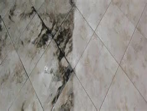 Regal Carpet Tile Care of Lakeland Lakeland s Premiere