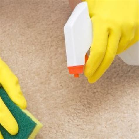 Removing Vomit Stains from Carpet ThriftyFun