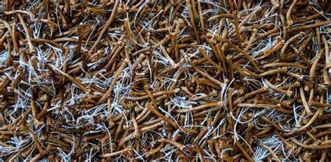 Repairing Burnt or Melted Carpet All Kleen Carpet Cleaning
