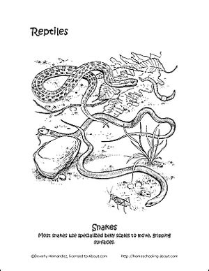Reptiles Coloring Book Ten Different Pages ThoughtCo