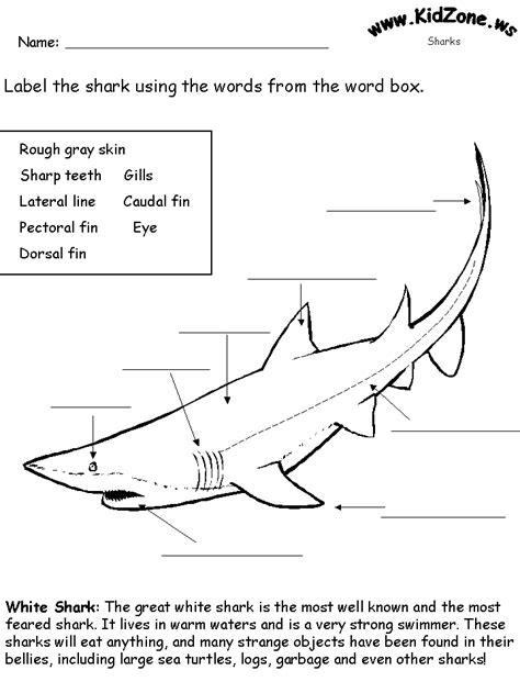 SHARK ACTIVITIES Kidzone Educational Worksheets