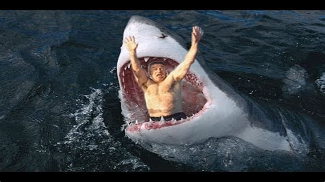 Shark Guardian 100 Awesome Shark Facts