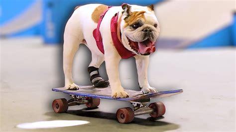 Skateboarding Dog YouTube