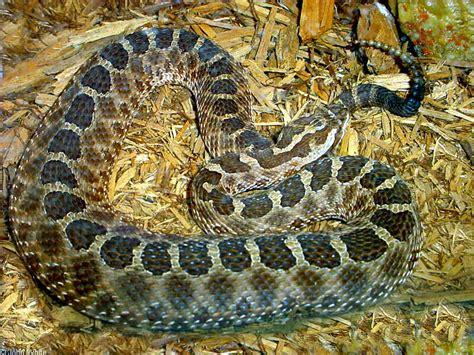 Snakes of New York esf edu