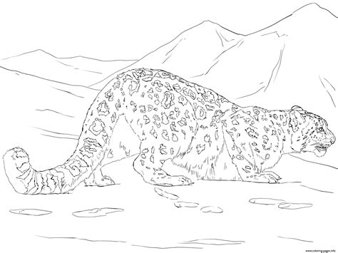 Snow Leopard Hunting coloring page Free Printable