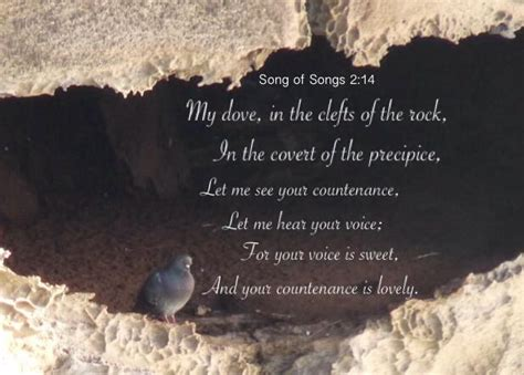 Song of Solomon 2 14 My dove in the clefts of the rock in
