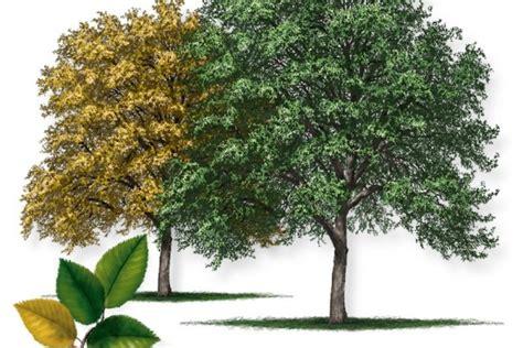 Sorelle Tree Farm Inc Wholesale Trees in East Texas
