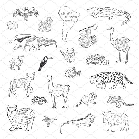 South American Animal Coloring Info Pages