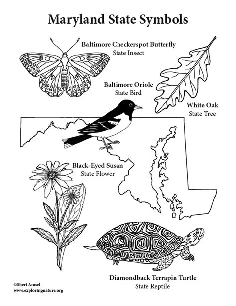State Facts Coloring pages Games Activities Symbols