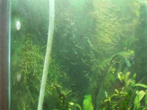 Step by Step Create a Java Moss Wall YouTube
