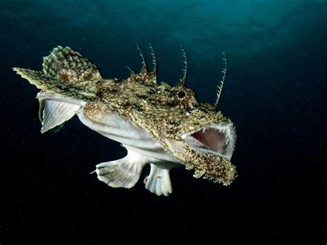 Strange Looking Sea Creature Photos National Geographic