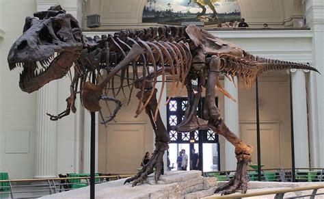 Sue dinosaur Wikipedia