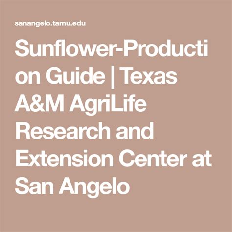 Sunflower Production Guide Texas A M AgriLife Research