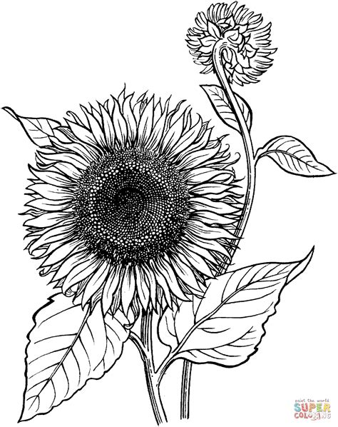 Sunflower coloring pages Free Coloring Pages