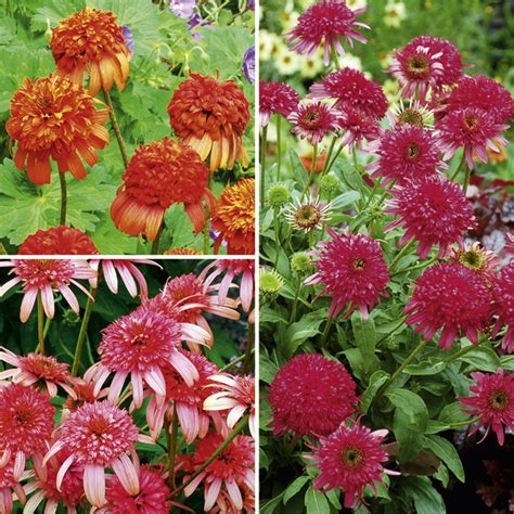 Suttons Seeds Buy Plug Plants Vegetable Seeds Flowers