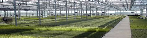 Swift Greenhouses CONTACT US