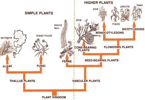 Taxonomy of Woody Plants Tripod