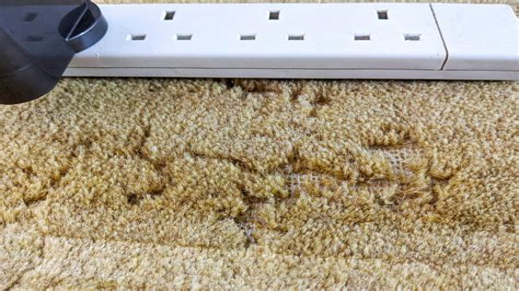Termite Infestation Carpet Infestation Orkin