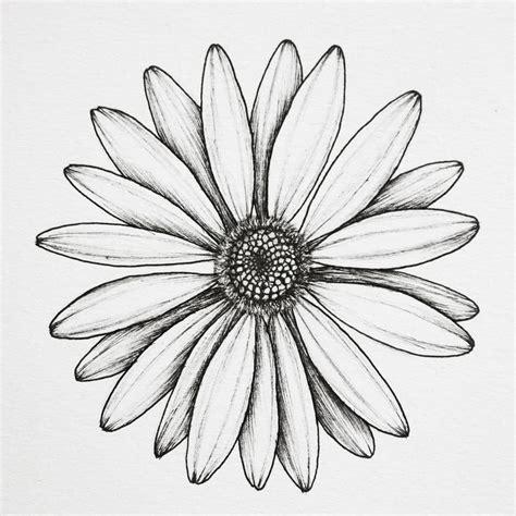 The 25 best Daisy drawing ideas on Pinterest Daisy art