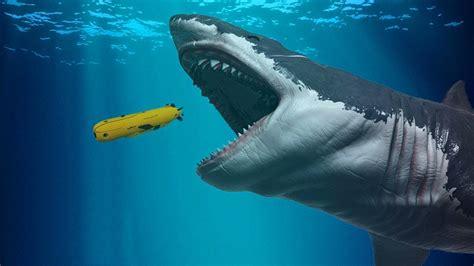 The Megalodon Shark SharkSider