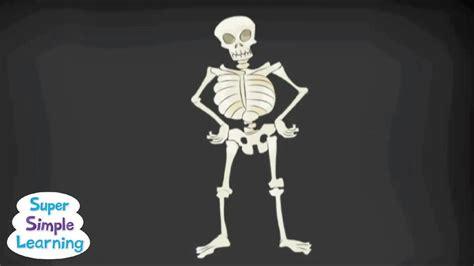 The Skeletal System Skeleton Dance How Body YouTube