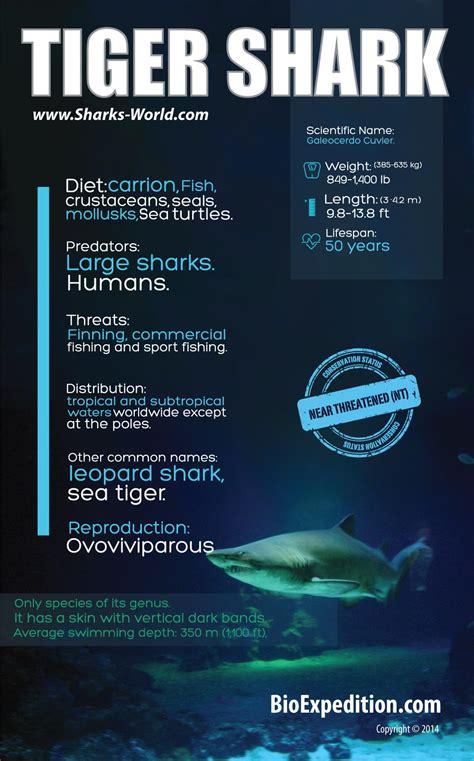 Tiger Shark Shark Facts and Information