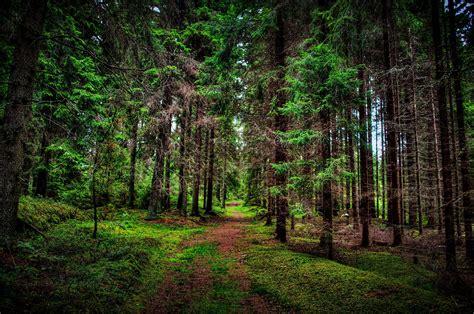 Tree Wallpaper Nature Wallpaper Forest Wallpaper