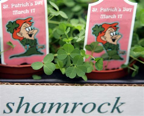 Trump St Patrick s Day Hats Disappear After Shamrock Mix