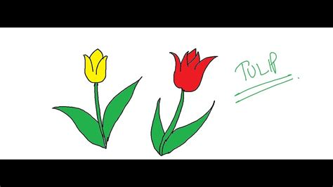 Tulip Drawing Cartooning Lesson How to Draw Cartoons
