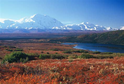 Tundra Plants Blue Planet Biomes