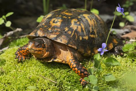 Turtles and Turtle Care