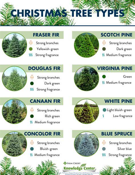 Types and names of Live Christmas Trees TreeNames