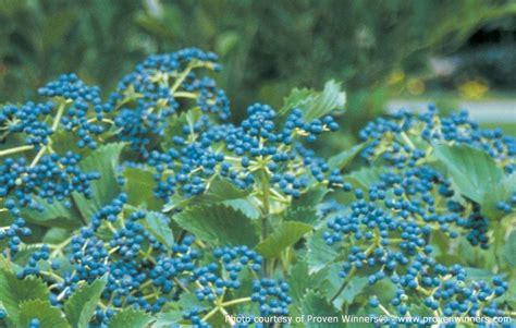 Vanstone Nurseries Wholesale Nursery Perennials