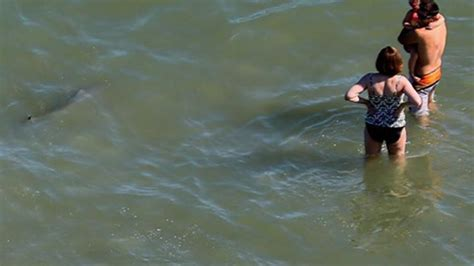 Video shows 8 sharks swimming near Myrtle Beach WRAL
