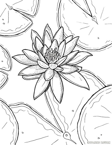 Water lily coloring pages Free Coloring Pages