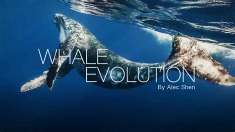 Whales evolution YouTube