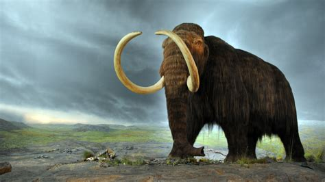Why Bringing Back a Wooly Mammoth Is No Longer Science Fiction