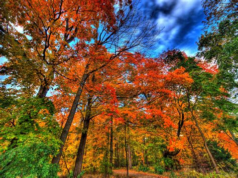 Why leaves change color in the Fall by Jean Warren