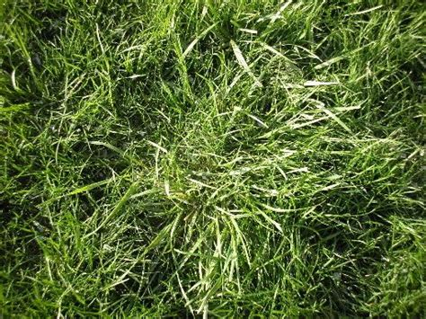 Why patches of lawn can be different colors cleveland