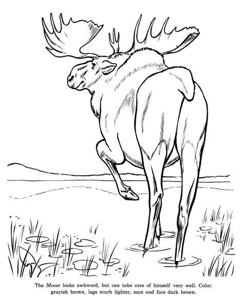 Wild Animal Coloring Pages Animal Identification