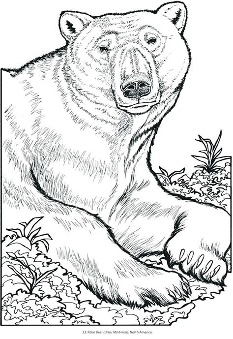 Wild Animal Coloring Pages Wild Animals Coloring Pages