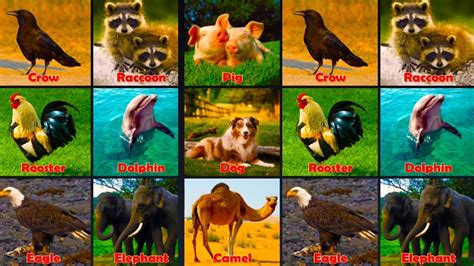 Wild Animal Sounds for Children Kids Learning Videos