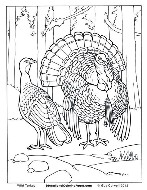 Wild Animals Coloring Pages Drawing and Coloring Pages