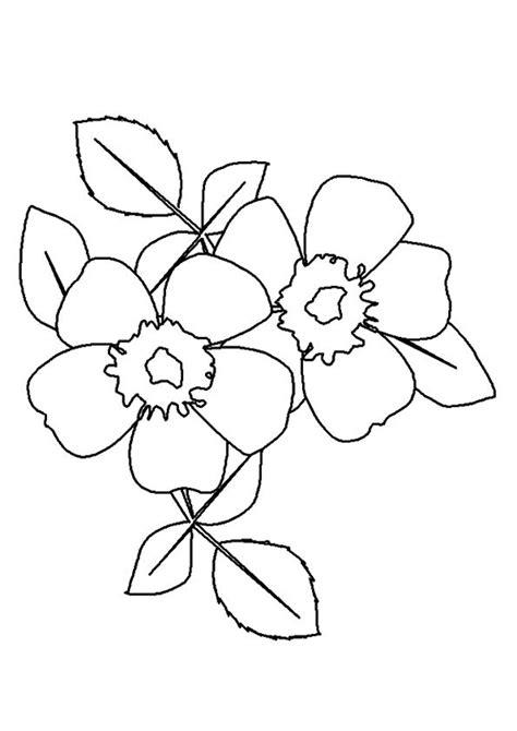 Wild Prairie Rose coloring page Free Printable Coloring