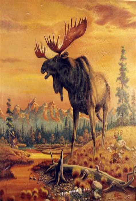 Wild animal drawings Flickr