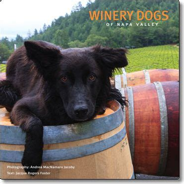 Winery Dogs of Napa Valley Sonoma Oregon Central