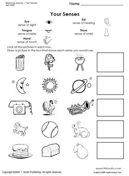 Your Five Senses Worksheet A tlsbooks